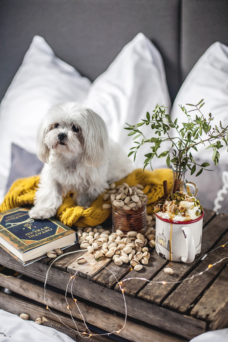 hotel-bacowka-pies